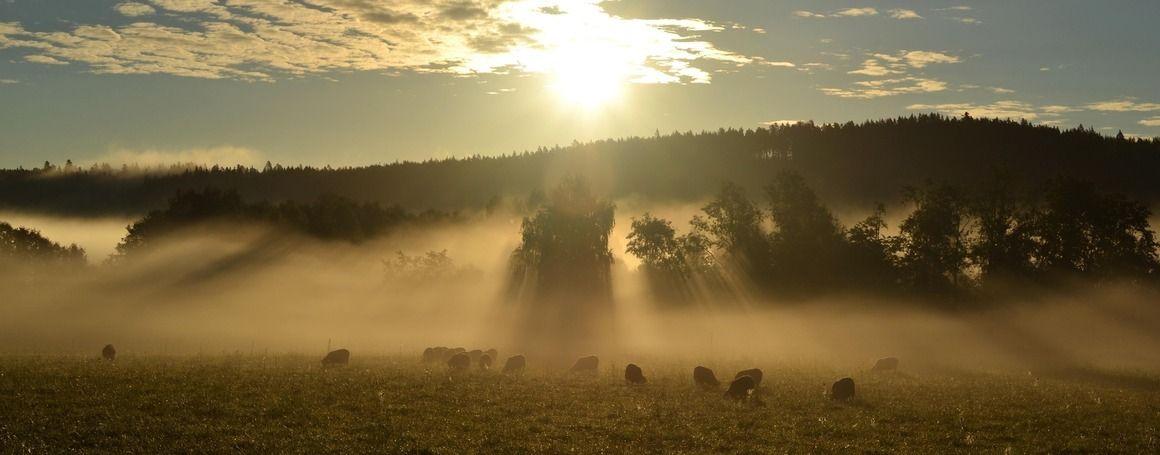 Widichs - Gårdsprodukter från Gustafs