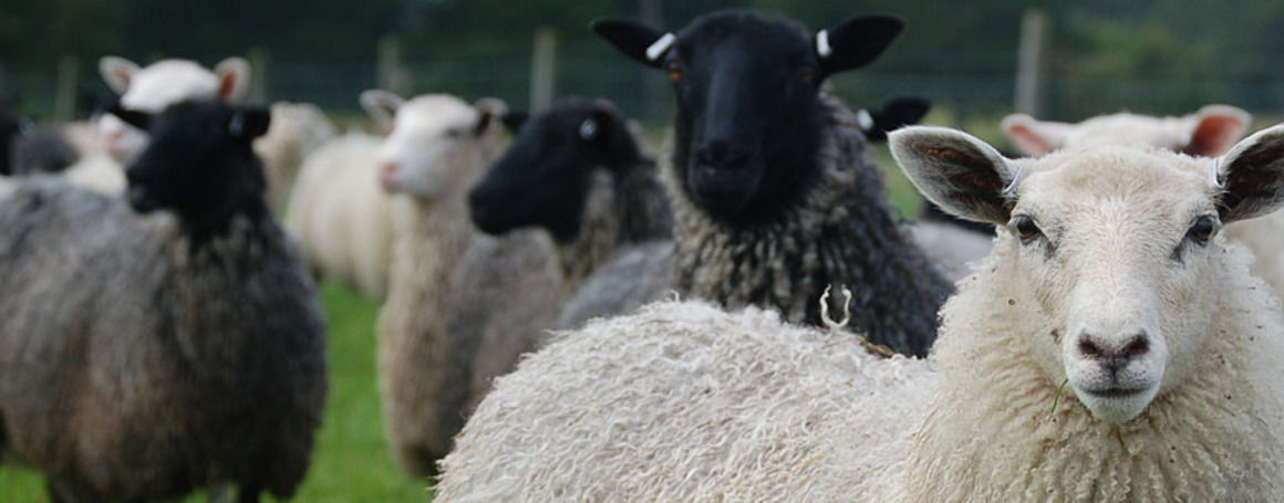 Rommunds fårgård