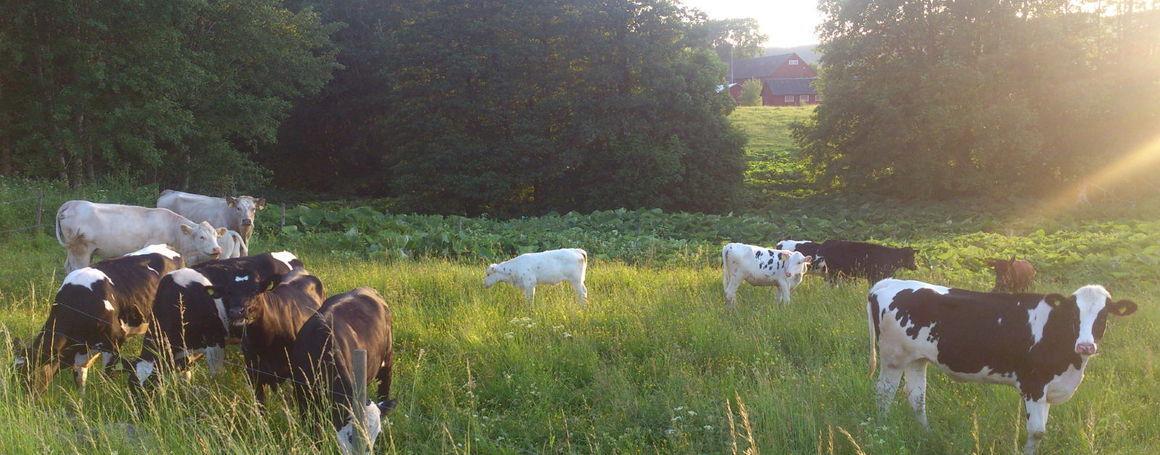 Norra Bissgårdens Lantbruk