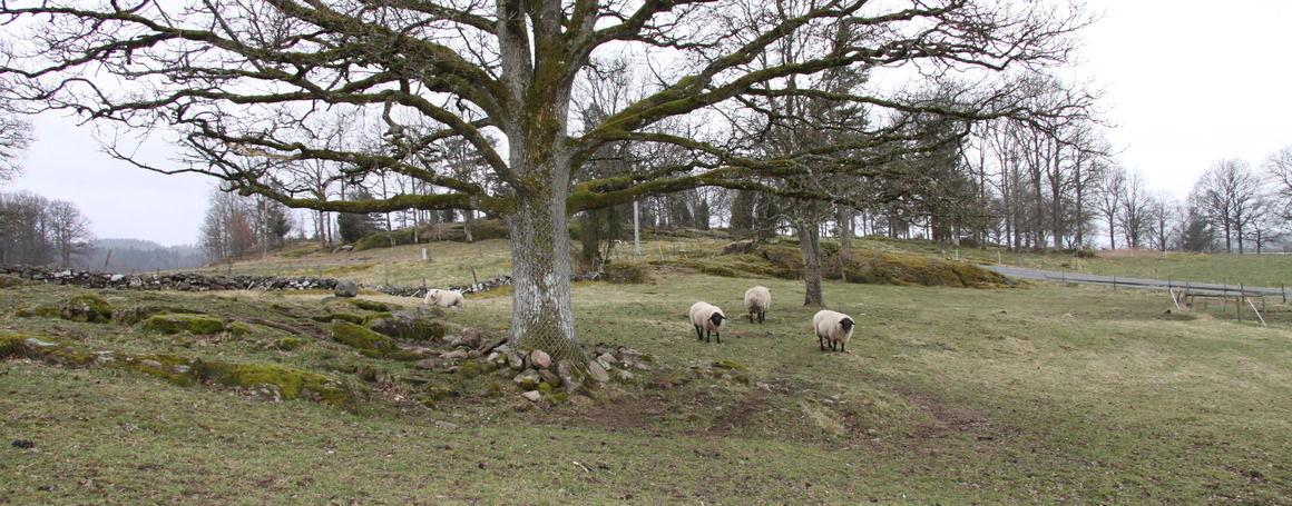Norrgårdens Djur och Natur