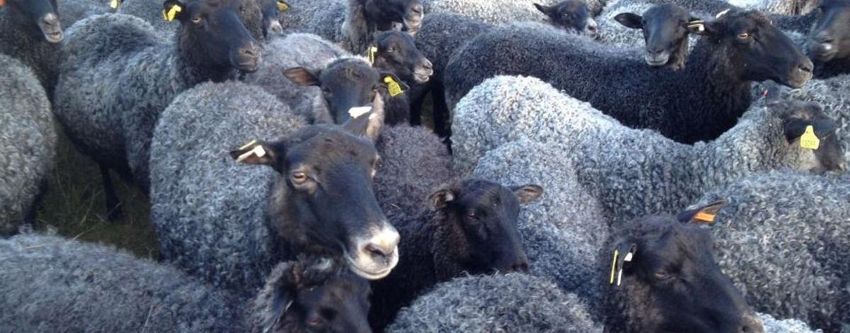 Norrgärdets Natur och Lamm
