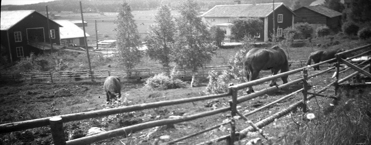 Gränsforsgårdens Lantbruk